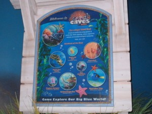 Sign in The Seas With Nemo & Friends