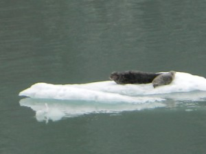 Alaskan Wildlife on the Disney Wonder
