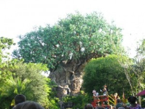 Animal Kingdom's Tree of Life