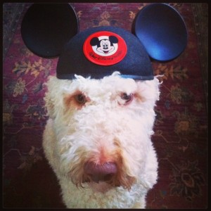 Disney Dog Henry Jones, Junior
