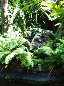 Butterfly on the Jungle Cruise