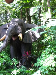 WDW Jungle Cruise Elephant