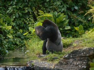 Animal Kingdom Gorilla