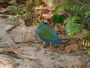 Bird in Animal Kingdom