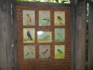 Animal Kingdom Asian Aviary Bird Spotting Guide