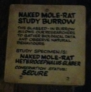 Disney's Animal Kingdom - Naked Mole Rat Sign
