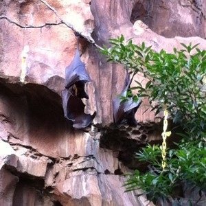 Animal Kingdom - Bats on the Maharajah Jungle Trek