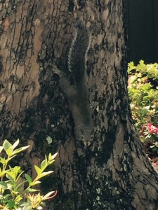 RM-Fort-Wilderness-Squirrel