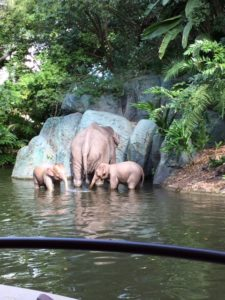 Jungle Cruise Elephant Family